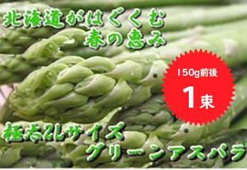 写真:今年も発送開始!! 北海道の春一番 シャキシャキの「グリーンアスパラ」朝獲り 一束150g前後 厳選した2Lサイズのみ送ります
