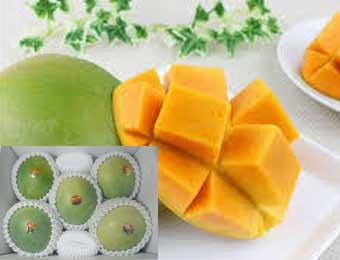 写真:幻のマンゴー キーツマンゴー 2.5kg ~ 2kg