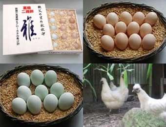 写真:高級二鶏卵 【雅(みやび)】烏骨鶏卵 10個、アローカナ卵 10個 計20個入